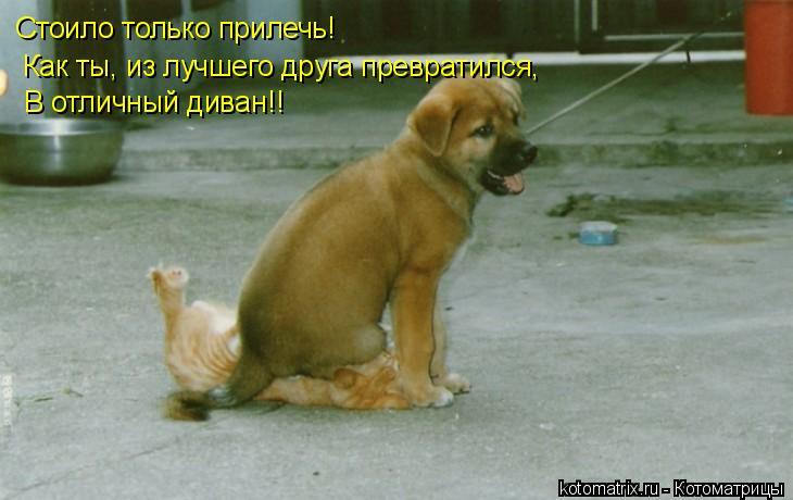 Котоматрица: Стоило только прилечь!  Как ты, из лучшего друга превратился,   В отличный диван!!