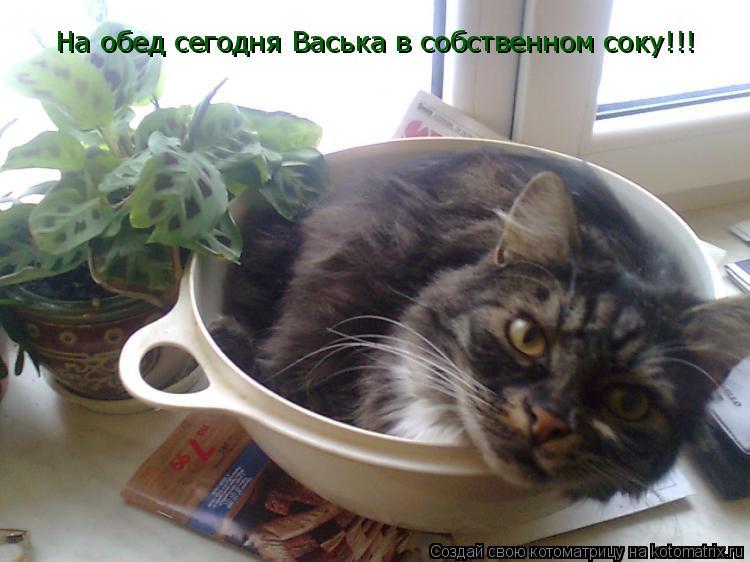 Котоматрица: На обед сегодня Васька в собственном соку!!!