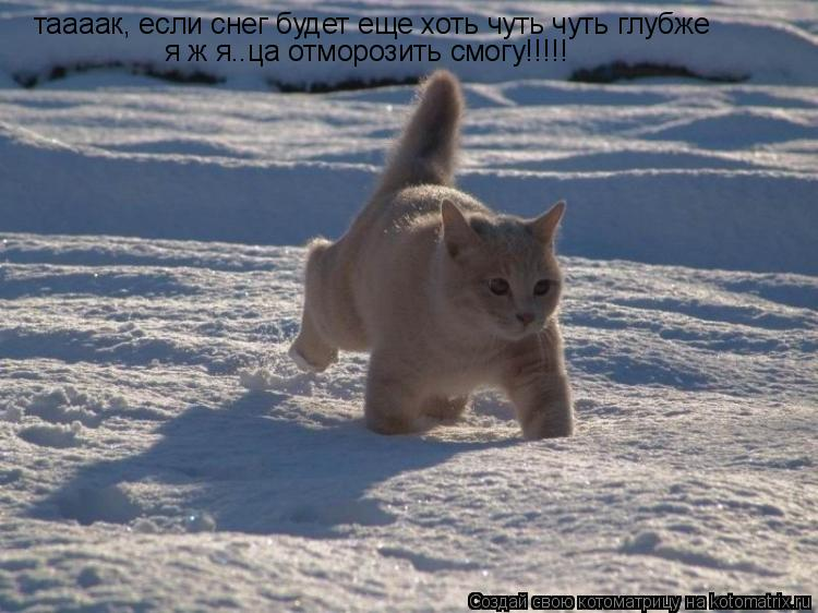 Котоматрица: таааак, если снег будет еще хоть чуть чуть глубже я ж я..ца отморозить смогу!!!!!