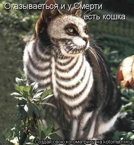 Котоматрица: Оказываеться и у Смерти есть кошка