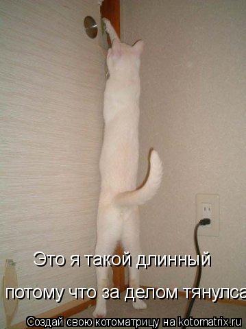 Котоматрица: Это я такой длинный  потому что за делом тянулса