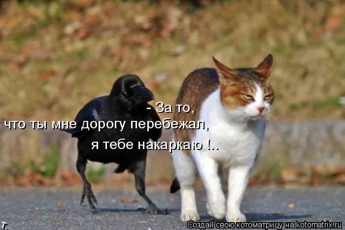 Котоматрица: - За то,  что ты мне дорогу перебежал, я тебе накаркаю !..
