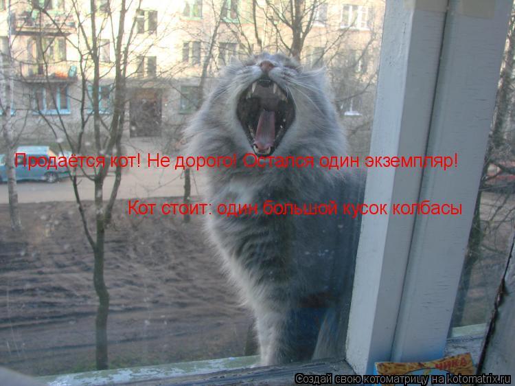 Котоматрица: Продаётся кот! Не дорого! Остался один экземпляр!  Кот стоит: один большой кусок колбасы
