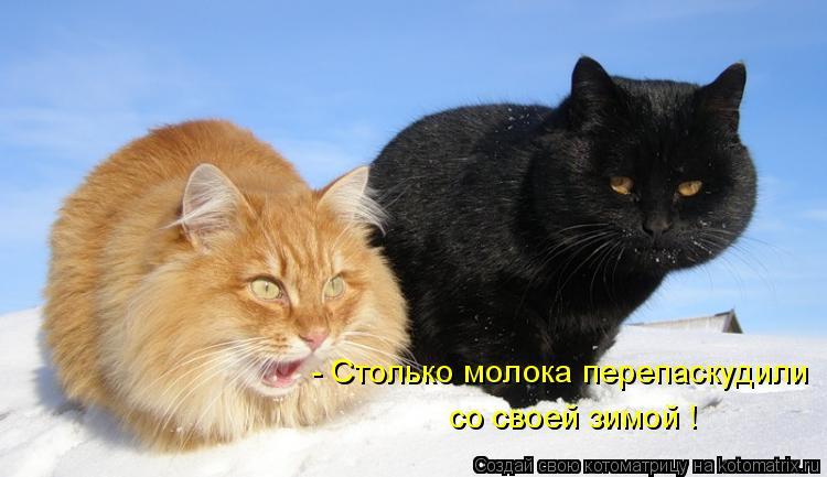 Котоматрица: - Столько молока перепаскудили  со своей зимой !