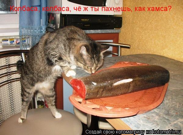 Котоматрица: Колбаса, колбаса, чё ж ты пахнешь, как хамса?