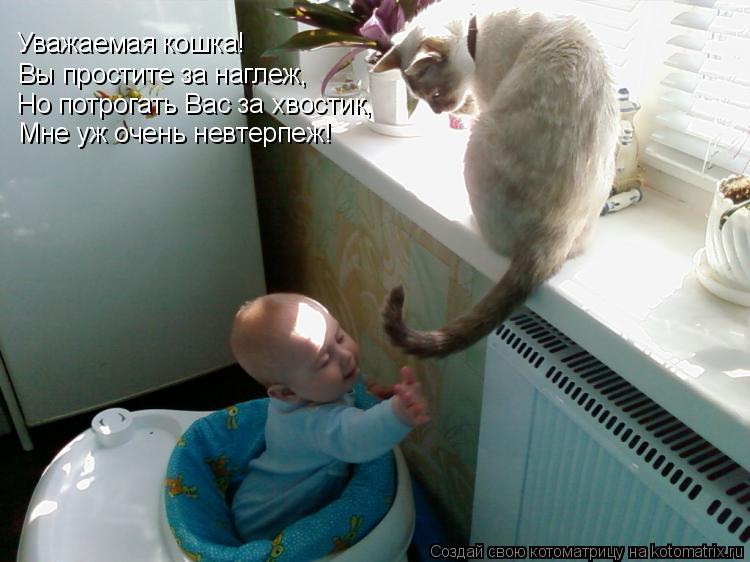 Котоматрица: Уважаемая кошка! Вы простите за наглеж, Но потрогать Вас за хвостик, Мне уж очень невтерпеж!
