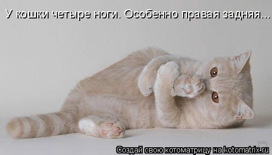 Котоматрица: У кошки четыре ноги. Особенно правая задняя...