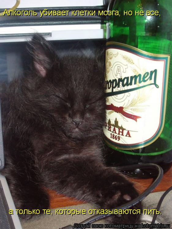 Котоматрица: Алкоголь убивает клетки мозга, но не все,  а только те, которые отказываются пить.