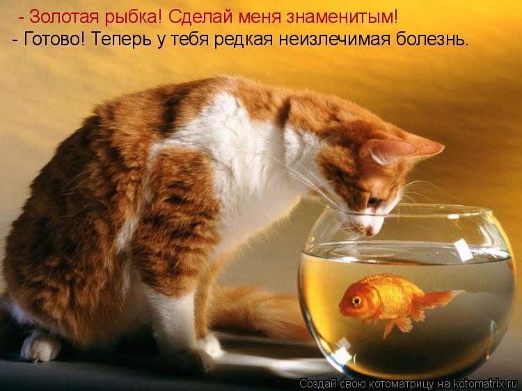 Котоматрица: - Золотая рыбка! Сделай меня знаменитым!   - Готово! Теперь у тебя редкая неизлечимая болезнь.