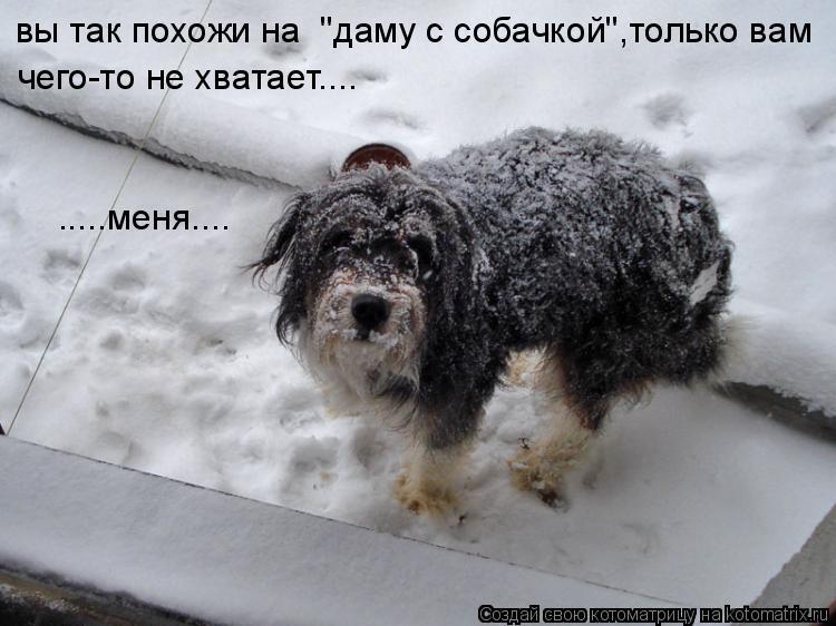 """Котоматрица: вы так похожи на  """"даму с собачкой"""",только вам   чего-то не хватает....  .....меня...."""