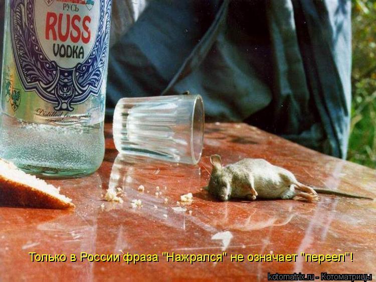 """Котоматрица: Только в России фраза """"Нажрался"""" не означает """"переел""""!"""