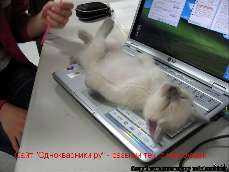 """Котоматрица: Сайт """"Одноквасники ру"""" - разыщи тех, с кем бухал!"""