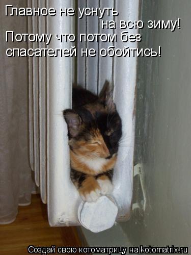 Котоматрица: Главное не уснуть на всю зиму! Потому что потом без спасателей не обойтись!