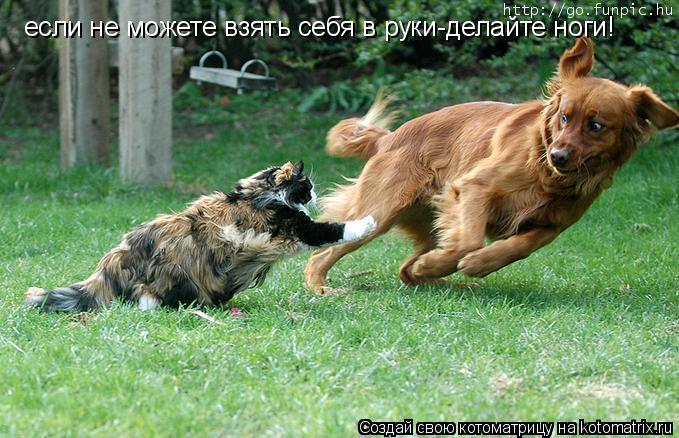 Котоматрица: если не можете взять себя в руки-делайте ноги!