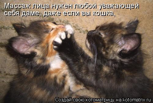 Котоматрица: Массаж лица нужен любой уважающей себя даме, даже если вы кошка,