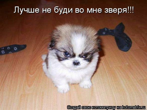 Котоматрица: Лучше не буди во мне зверя!!!