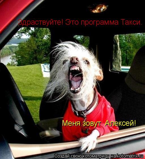 Котоматрица: Здраствуйте! Это программа Такси. Меня зовут  Алексей!
