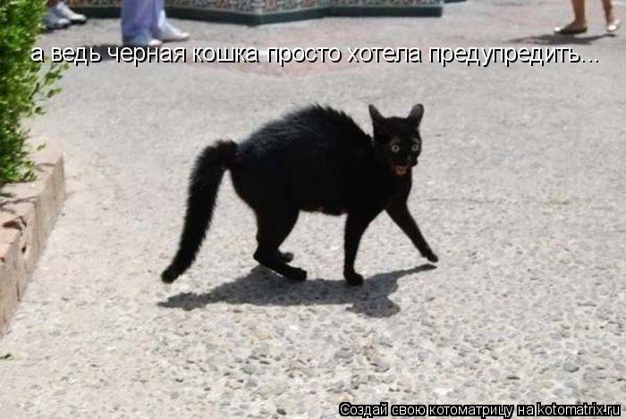 Котоматрица: а ведь черная кошка просто хотела предупредить...