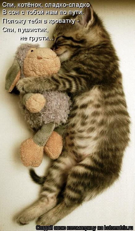 Котоматрица: Спи, котёнок, сладко-сладко В сон с тобой нам по пути. Положу тебя в кроватку - Спи, пушистик,  не грусти...