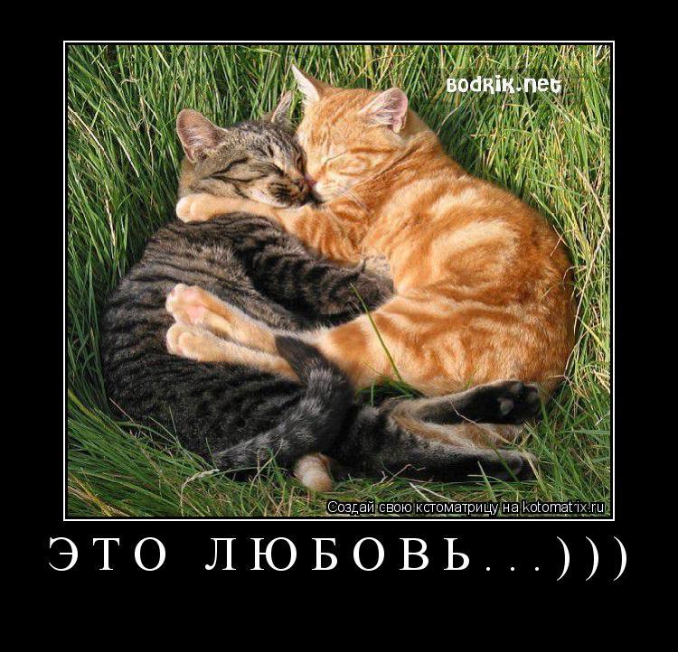 Котоматрица: Это любовь...)))