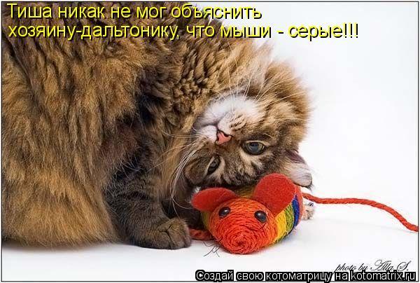 Котоматрица: Тиша никак не мог объяснить хозяину-дальтонику, что мыши - серые!!!