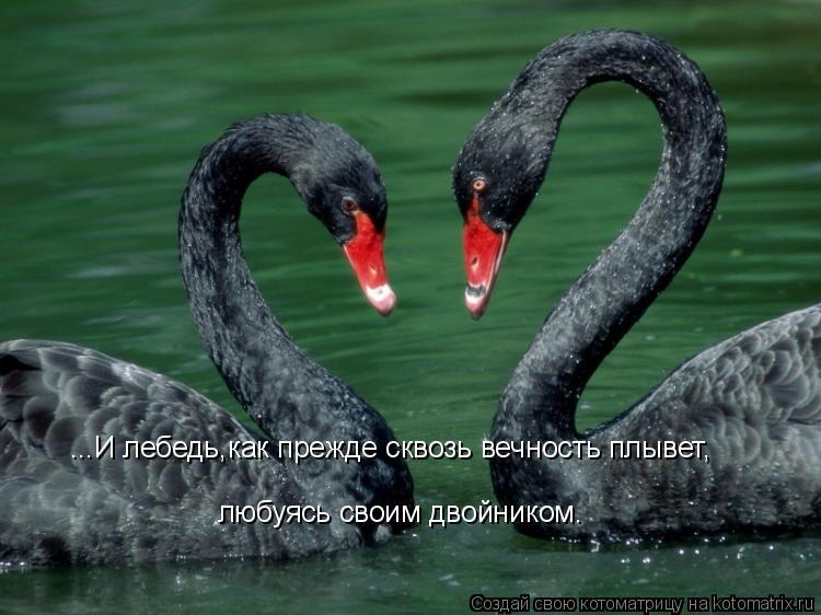 Котоматрица: ...И лебедь,как прежде сквозь вечность плывет, любуясь своим двойником.