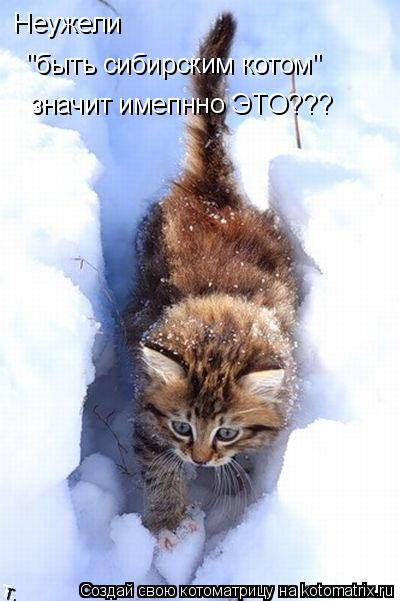 """Котоматрица: Неужели """"быть сибирским котом"""" значит имепнно ЭТО???"""