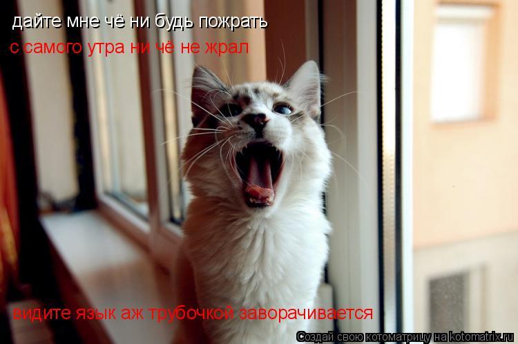 Котоматрица: дайте мне чё ни будь пожрать  с самого утра ни чё не жрал  видите язык аж трубочкой заворачивается