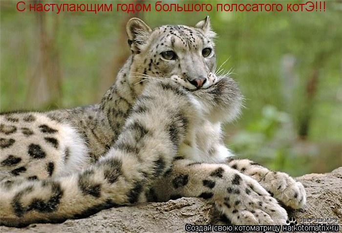 Котоматрица: С наступающим годом большого полосатого котЭ!!!