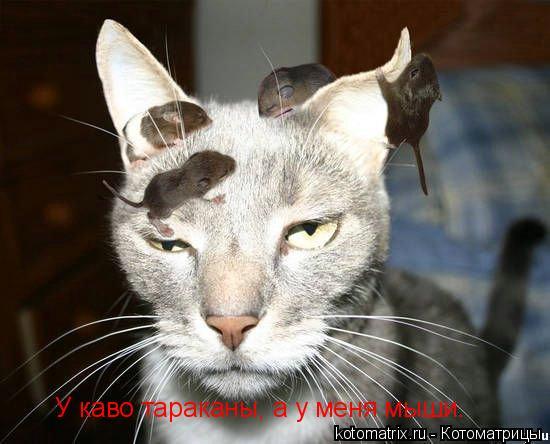 Котоматрица: У каво тараканы, а у меня мыши.
