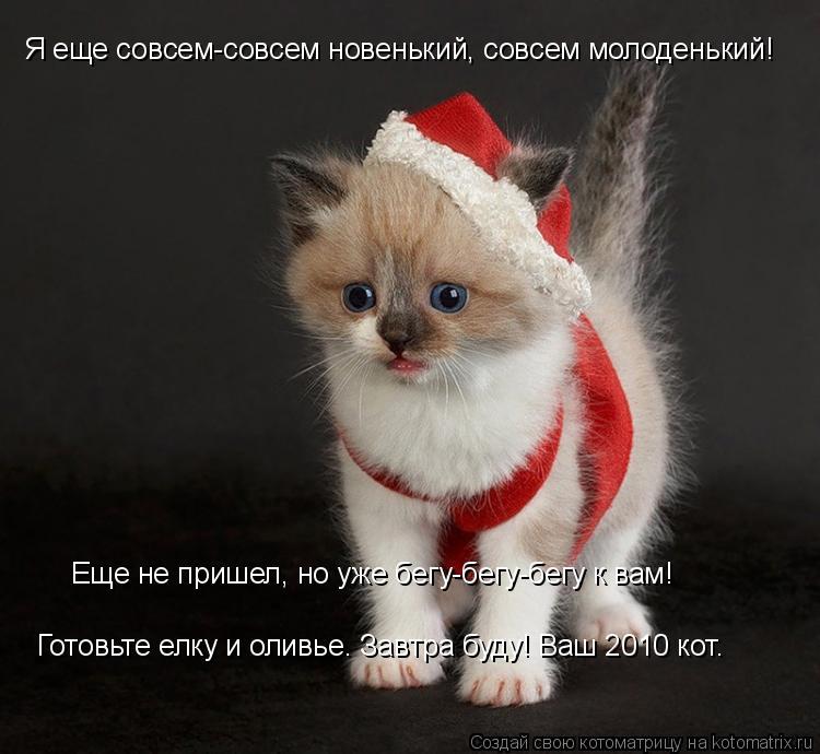 Котоматрица: Я еще совсем-совсем новенький, совсем молоденький! Еще не пришел, но уже бегу-бегу-бегу к вам! Готовьте елку и оливье. Завтра буду! Ваш 2010 кот.