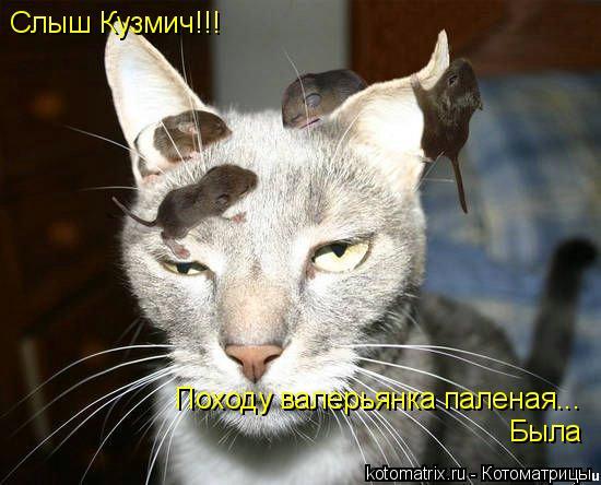 Котоматрица: Слыш Кузмич!!! Походу валерьянка паленая... Была