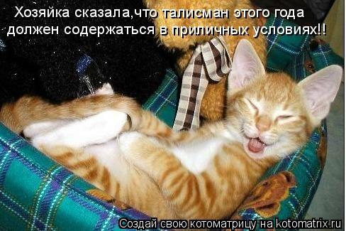 Котоматрица: Хозяйка сказала,что талисман этого года должен содержаться в приличных условиях!!