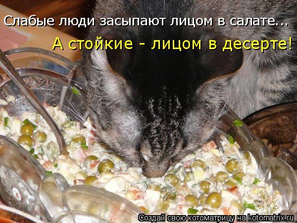 Котоматрица: Слабые люди засыпают лицом в салате... А стойкие - лицом в десерте!