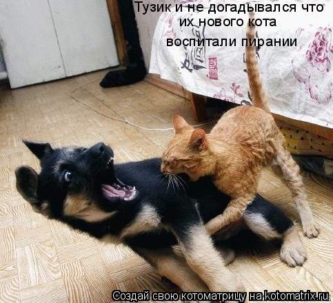 Котоматрица: Тузик и не догадывался что  их нового кота  воспитали пирании