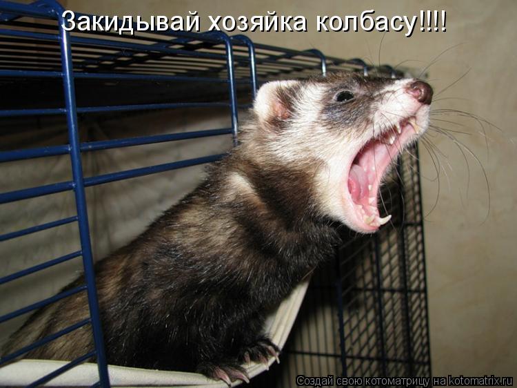 Котоматрица: Закидывай хозяйка колбасу!!!!