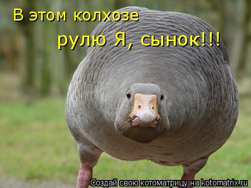 Котоматрица: В этом колхозе рулю Я, сынок!!!