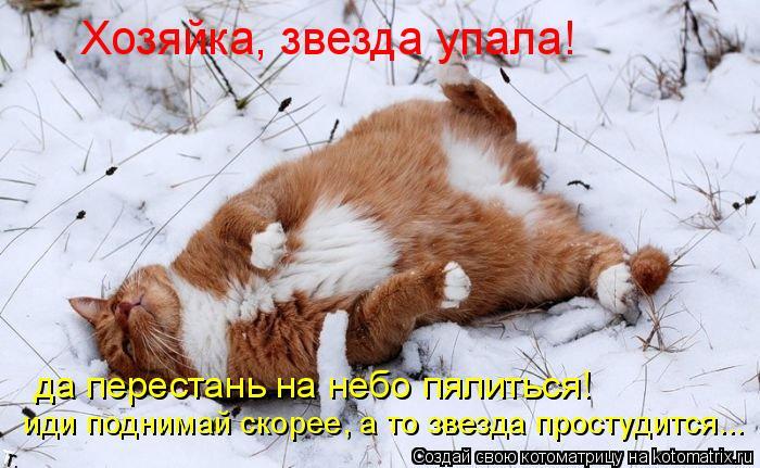 Котоматрица: Хозяйка, звезда упала! да перестань на небо пялиться! иди поднимай скорее, а то звезда простудится...
