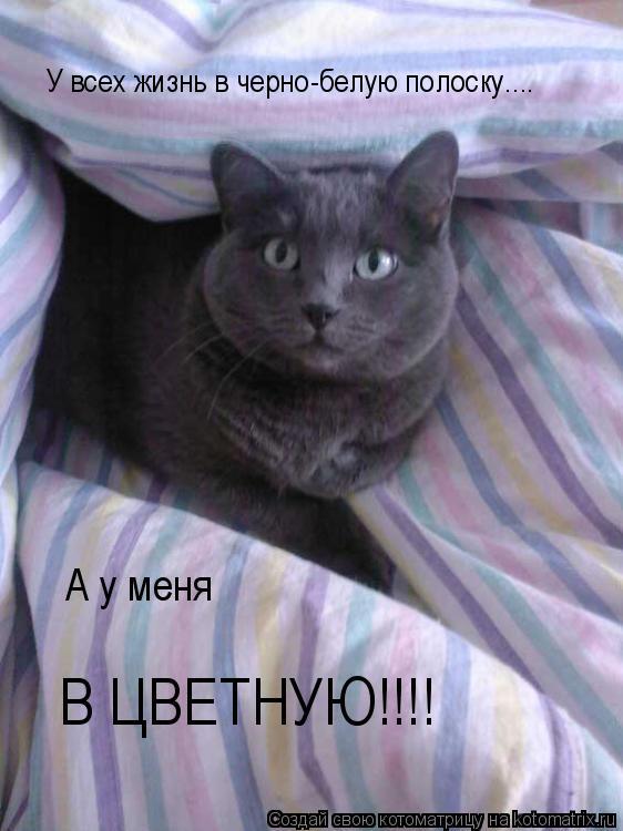 Котоматрица: У всех жизнь в черно-белую полоску.... А у меня  В ЦВЕТНУЮ!!!!