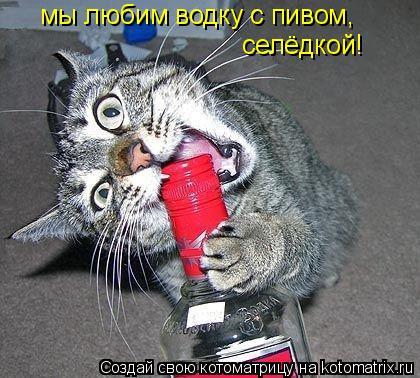 Котоматрица: мы любим водку с пивом, селёдкой!