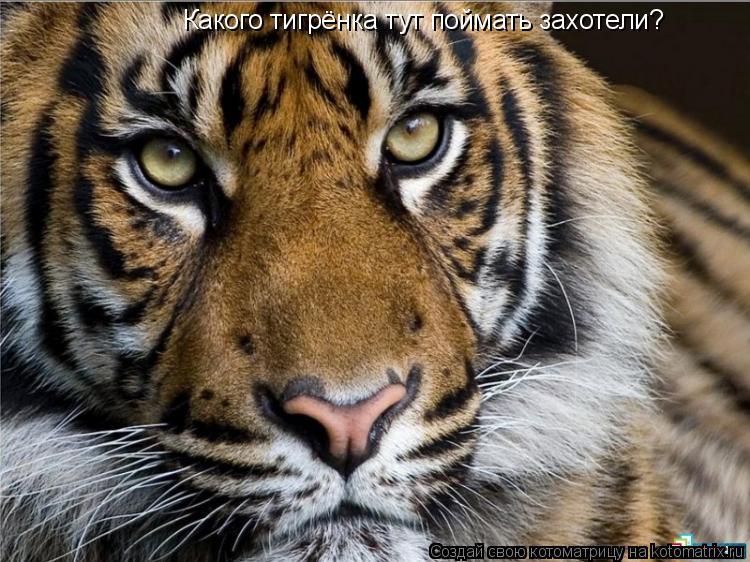 Котоматрица: Какого тигрёнка тут поймать захотели?