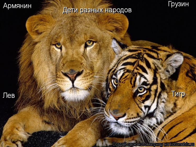 Котоматрица: Лев Тигр Армянин Грузин Дети разных народов