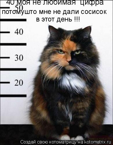 Котоматрица: 40 моя не любимая  цифра потомушто мне не дали сосисок в этот день !!!