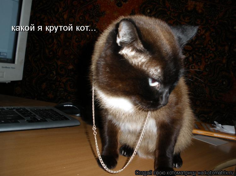 Котоматрица: какой я крутой кот...