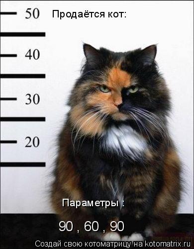 Котоматрица: Продаётся кот: Параметры : 90 , 60 , 90