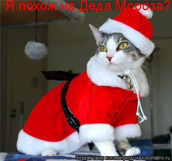 Котоматрица: Я похож на Деда Мороза?