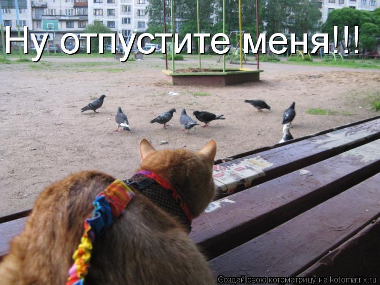 Котоматрица: Ну отпустите меня!!!