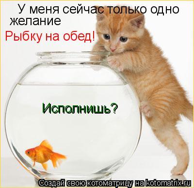 Котоматрица: У меня сейчас только одно желание Рыбку на обед! Исполнишь?