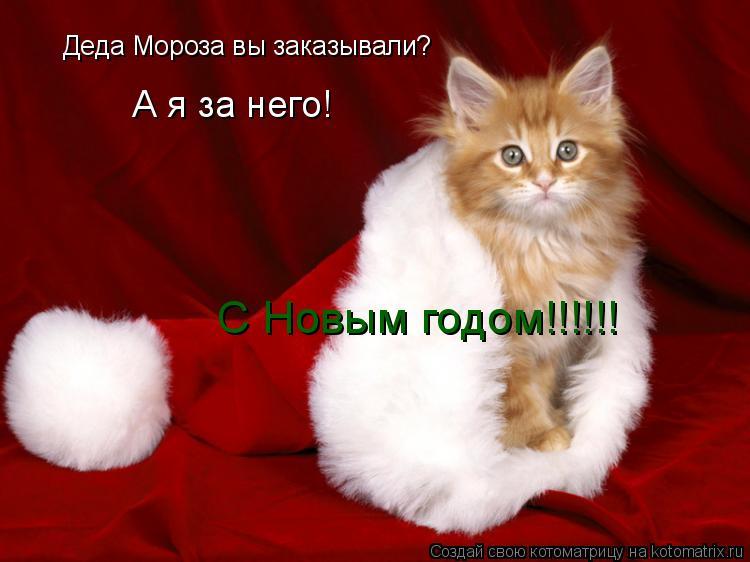 Котоматрица: Деда Мороза вы заказывали? А я за него! С Новым годом!!!!!!