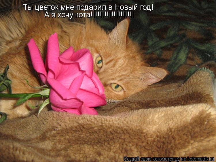 Котоматрица: Ты цветок мне подарил в Новый год! А я хочу кота!!!!!!!!!!!!!!!!!!!